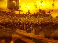*الشرطة تضبط يوم امس مختبر كبير لترويج المخدرات في منزل في مدينة هرتسليا*