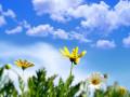الجو لطيف اجواء ربيعية السماء صافية