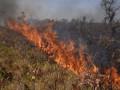حرائق الغابات في بوليفيا تلتهم ملايين الحيوانات والهكتارات