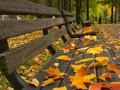 فصل الخريف يبدأ الاربعاء القادم ويستمر 89 يوما و20 ساعة و38 دقيقة
