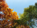 الصيف والخريف يتقاسمان