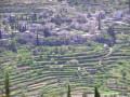 قرية بتير في قائمة التراث العالمي.. بلا بنية تحتية  المزيد على دنيا الوطن .